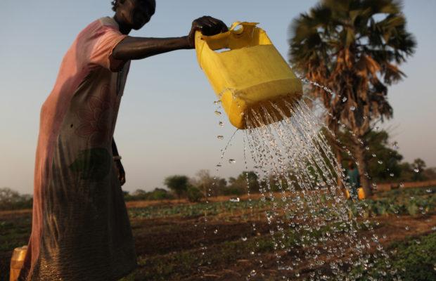woman farming in Awiel