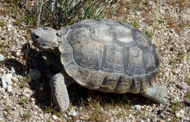 VIDEO: Hilarious clip of tortoise chasing dog goes viral