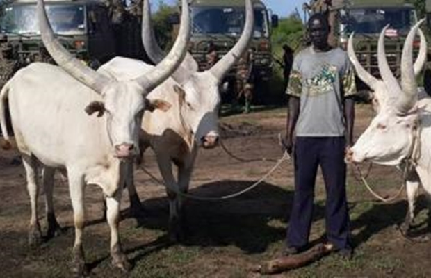 SPLA gives cows to Museveni for his support