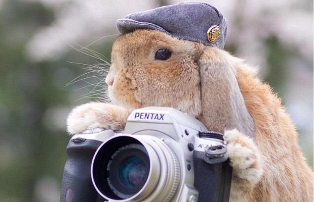 Meet the world's most stylish rabbit (PHOTOS)