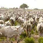 The Girl for 500 Cows: The Commodification of girls in South Sudan