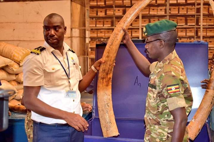 Three containers from SouthSudan with 750 pieces of ivory (meaning about 325 elephants were killed) have been intercepted in Uganda