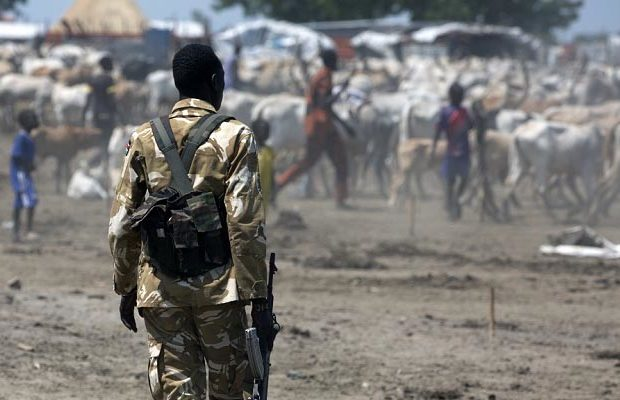 soldier stand overseeing cows in South Sudan.