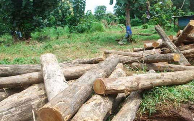 South Sudan forests shrinking by 1.5% annually