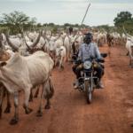 Attack by cattle raiders leave 12 dead in Warrap