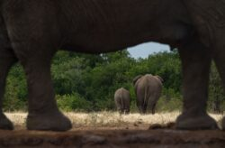 Residents warned against poaching as over 500 elephants arrive in Ruweng