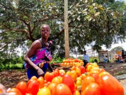 Government to invest in agriculture - VP Wani Igga