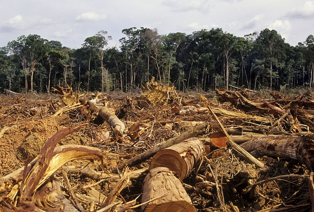 Central Equatoria bans logging