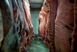 South Sudan to start exporting meat to international market